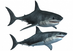 Shark Clipart at GetDrawings.com | Free for personal use Shark ...