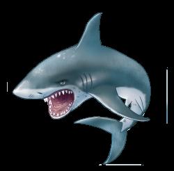 Shark PNG | SEA ANIMALS CLIP ART | Pinterest | Shark and Clip art