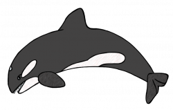 Killer whale clipart black and white dromgcb top - Clipartix