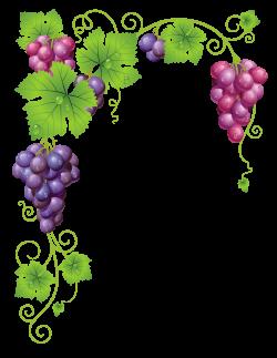 Transparent_Vine_Decor_PNG_Clipart_Picture.png (2566×3316) | Grapes ...