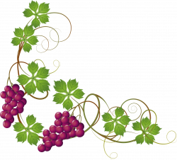 Grape Vine Clipart at GetDrawings.com | Free for personal use Grape ...