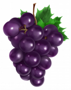 Transparent Grape PNG Clipart Picture | Fruit and vegetables ...