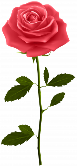 Red Rose with Stem PNG Clip Art   Gallery Yopriceville - High ...