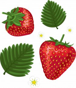 Strawberry PNG Image - PurePNG   Free transparent CC0 PNG Image Library