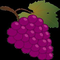 Common Grape Vine Wine Grappa Clip art - Bunch of grapes 1898*1920 ...
