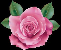 Pink Rose Transparent PNG Clip Art | CLIPART3 | Pinterest | Pink ...