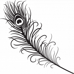 Peacock Feather Clipart Black And White | Clipart Panda - Free ...