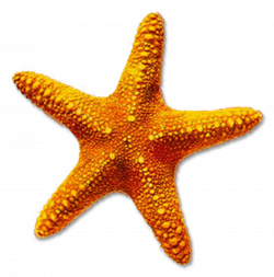 Pin by Cindy MacIsaac on Things to Make | Pinterest | Starfish and ...