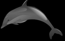 Dolphin jumping clip art - crazywidow.info