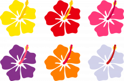 Hawaiian hibiscus are the seven known species of hibiscus regarded ...