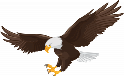 Eagle PNG Clip Art | Gallery Yopriceville - High-Quality Images and ...