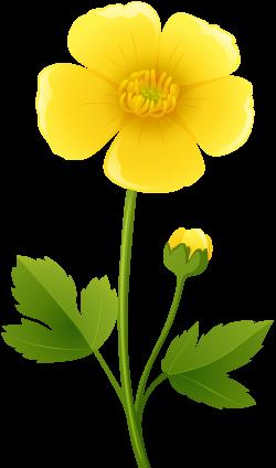 Yellow Flower Transparent PNG Clip Art Image | Buttercups ...