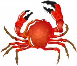Crab Transparent PNG Image | Gallery Yopriceville - High-Quality ...