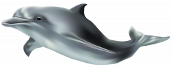 Dolphin PNG Clip Art Image   Gallery Yopriceville - High-Quality ...