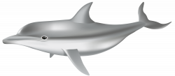 Dolphin PNG Transparent Clip Art Image | Gallery Yopriceville ...