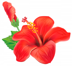 Red Exotic Flower PNG Clipart Picture | poroplast | Pinterest ...