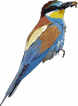 Clipart - European Bee-eater