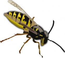 Wasp Facts for Kids | Cool Kid Facts
