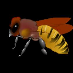 Bee Clipart : Honeybee | 3D Bee | Pinterest | Clip art free
