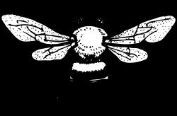 Honey Bee Tattoo Honey bee tattoo design | beer label art ...
