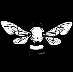 Honey Bee clip art - vector clip art online, royalty free & public ...