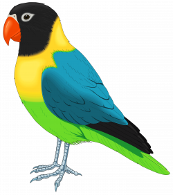 Multicolored Bird PNG Clipart - Best WEB Clipart