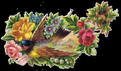 Birds and Floral - Vintage Clip Art Images | Pinterest | Clip art ...