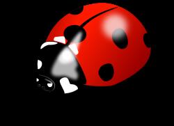 Clipart - Ladybird