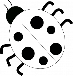ladybug%20drawing%20black%20and%20white | Black and white pictures ...