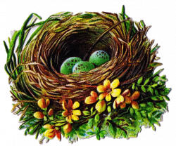 Bird Nest and Egg Graphics - 5 Antique Die Cut Images | Pinterest ...
