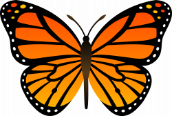 Butterfly Fourteen | Isolated Stock Photo by noBACKS.com | clip art ...