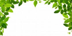 Image - 0a0492e38bbd38501e6dd2315ffff847 jungle-leaf-borders-with ...