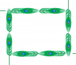 Peacock Border Page Clip Art at Clker.com - vector clip art online ...