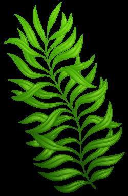 Exotic Green Plant PNG Clipart Image | Színes brushok | Pinterest ...