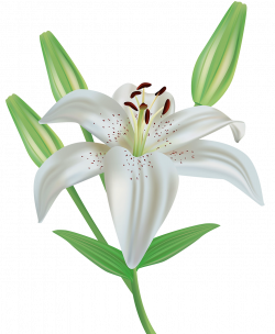 Lily Flower Clipart PNG Image | Gallery Yopriceville - High-Quality ...