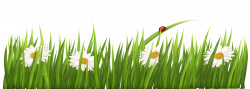 free flower clipart transparent background intended for your ...