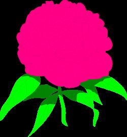 Peony | Free Stock Photo | Illustration of a pink peony flower | # 8483
