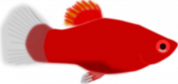Fish | Free Stock Photo | Illustration of a red fish | # 16753