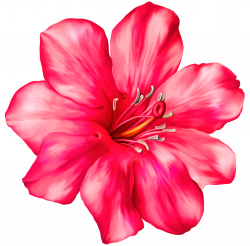 Exotic Pink Flower PNG Clipart Picture | Flower Wallpaper ...