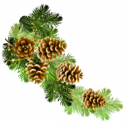 Transparent Pine Branch with Cones PNG Clipart | Gallery ...