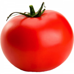 Tomato | Free Images at Clker.com - vector clip art online, royalty ...