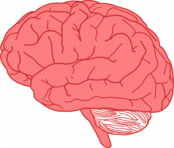 Facts About The Human Brain | Cool Kid Facts