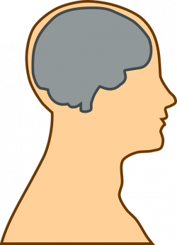 Differences in the Dyslexic Brain - Lexercise