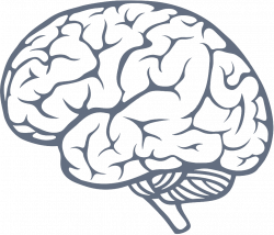 Simple Brain Drawing at GetDrawings.com | Free for personal use ...