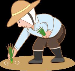 Farmer Rice Paddy Field Clip art - farmer 631*600 transprent Png ...