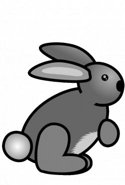 e/vbV7.gif (724×1075)   Rabbit & Hare GIF.   Pinterest   Rabbit