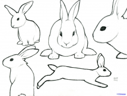 6 Rabbit drawing profile for free download on ayoqq cliparts