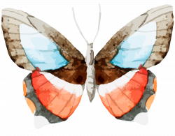 Set of 6 Free Butterfly Clipart-CU ok! - Free Pretty Things For You