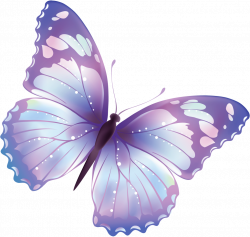 Butterfly Free PNG And Clipart Download - peoplepng.com
