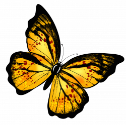 Yellow Transparent Butterfly PNG Clipart Picture | Butterflies ...